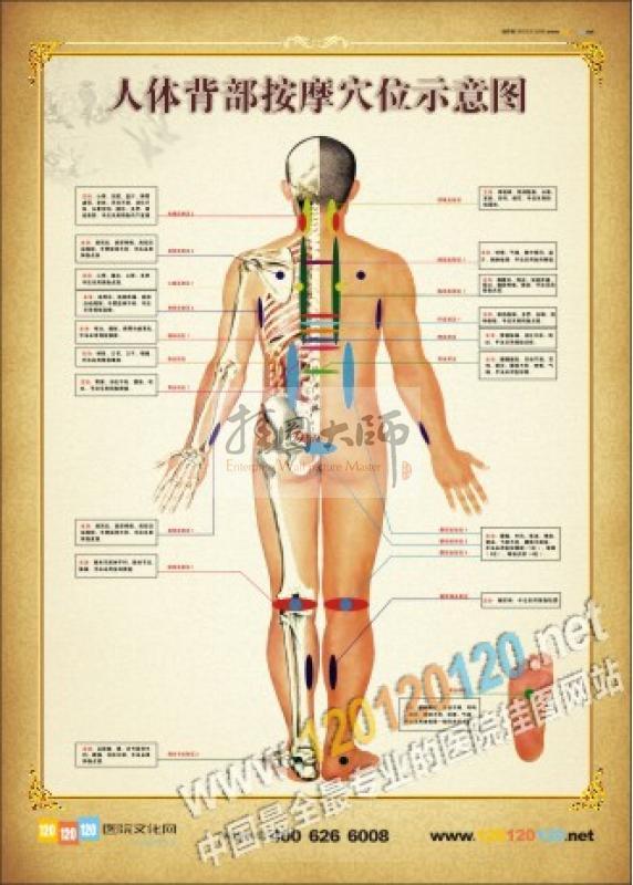 穴位图-人体背部按摩穴位示意图