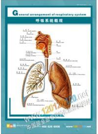 人体结构图 人体解剖图 医院挂图 人体骨骼结构图