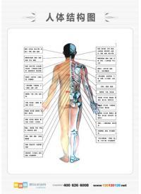 人体解剖图 男性人体解剖图 医学人体解剖图