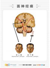 医学人体解剖图 男性人体解剖图 人体解剖图