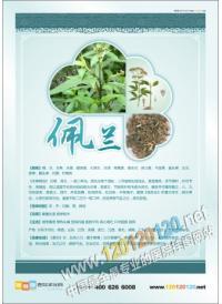 中医药文化图片 佩兰