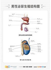 人体解剖图 医学人体解剖图 男性人体解剖图