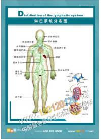 淋巴系统分布图
