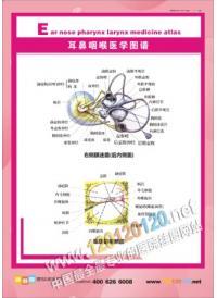 人体 解剖图/耳鼻咽喉医学图......