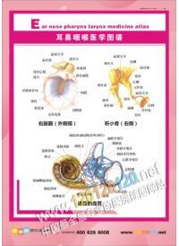 耳鼻喉解剖图