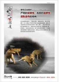 企业宣传海报 狼性企业组织