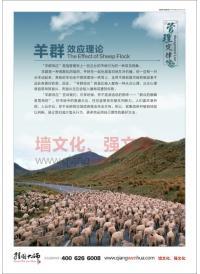 管理理念图片 羊群效应理论