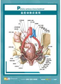 人体 肛肠/肛肠结构图/盆......