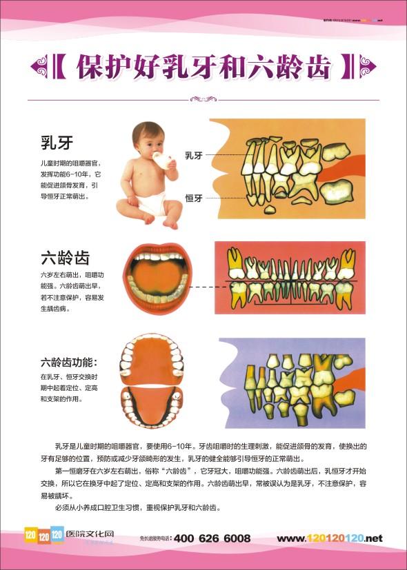 解剖图 牙齿的结构图 牙齿结构图 口腔科解剖图 牙