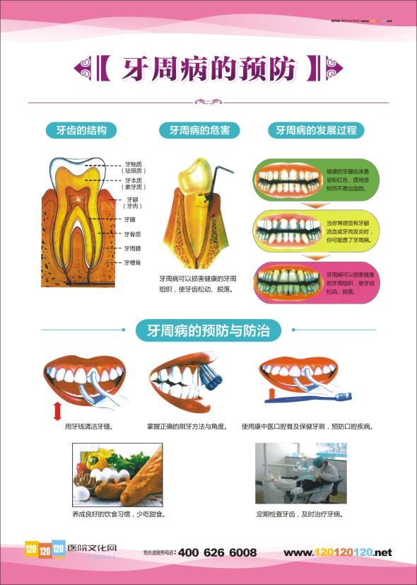 儿童牙齿结构图相关图片 儿童牙齿结构图相关图